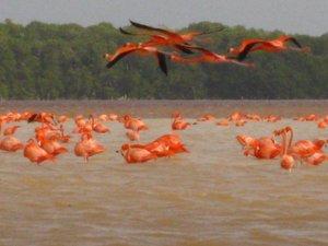 Emayas_flamingos