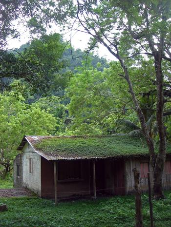 Greenhousing2