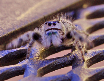 Spiderposesup